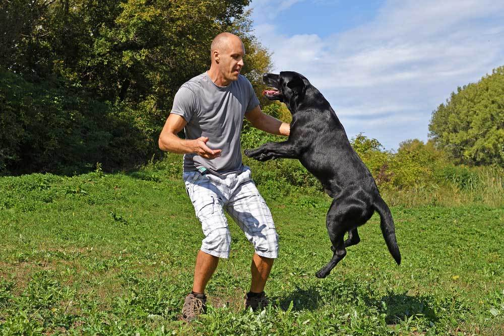 Black dog jumping up at man in grass field