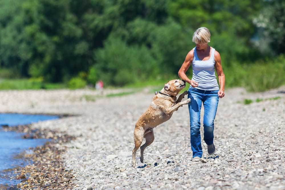Woman walking on beach with dog jumping up at her