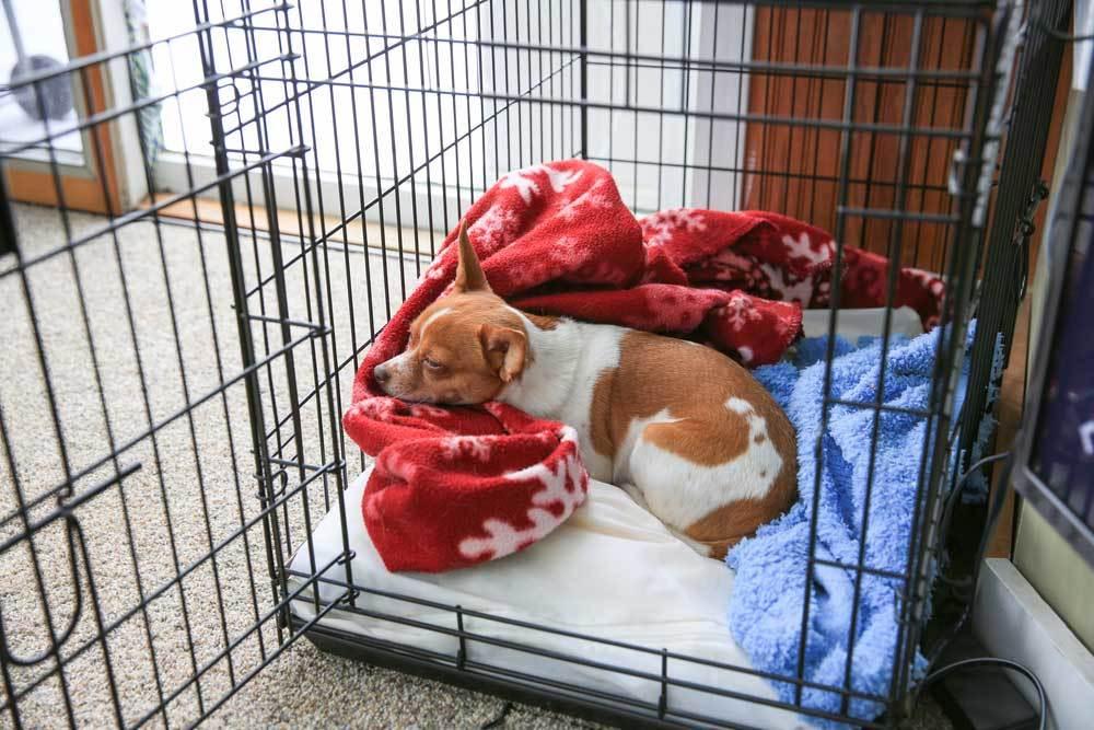 Dog sleeping in large metal crate