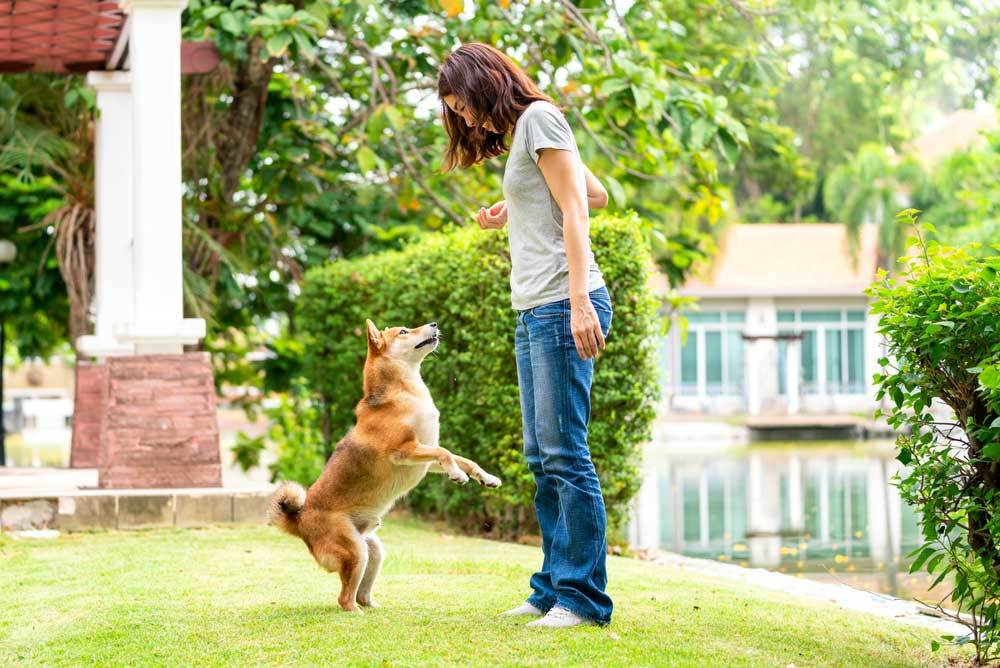 Woman being greeted in yard by jumping dog