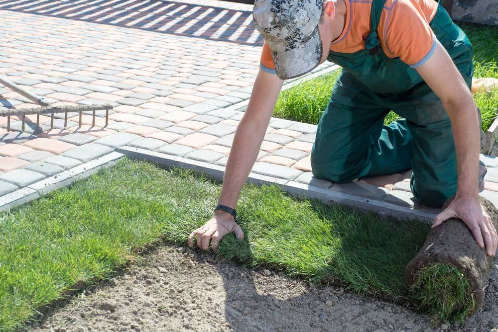 Man rolling out sod over soil