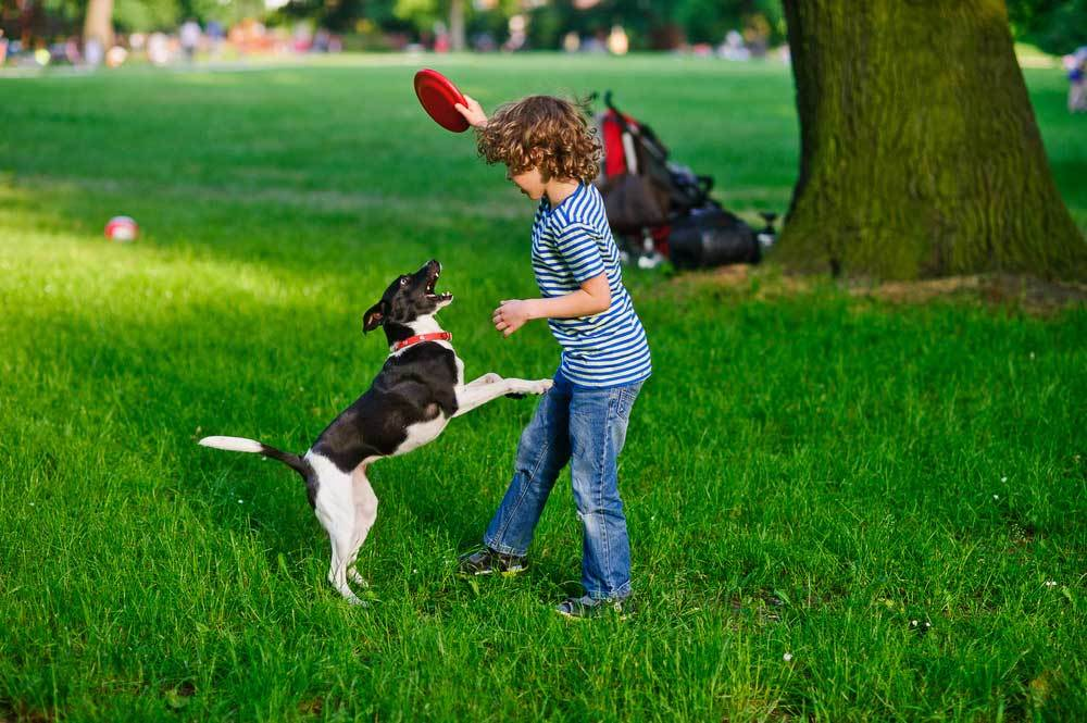Boy withholding frisbee from jumping dog