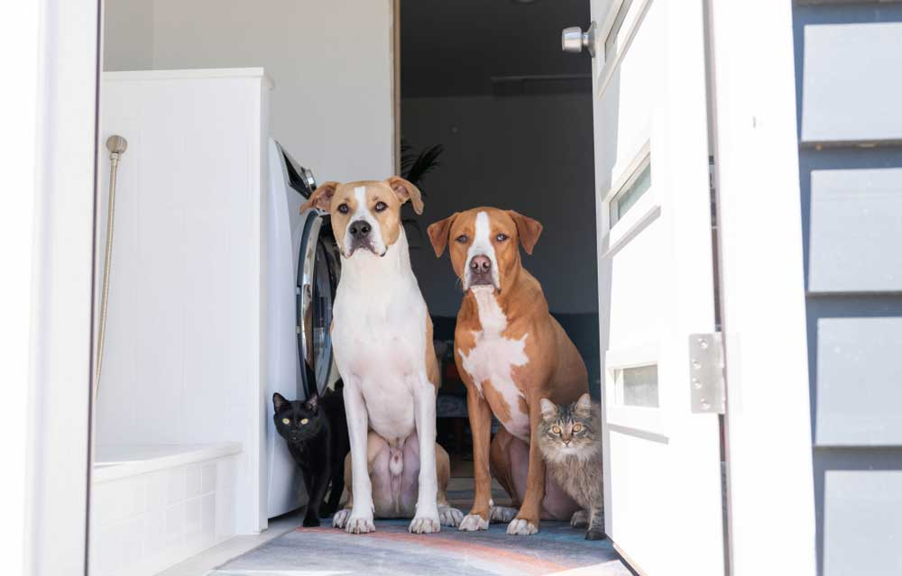 Dogs and cats sitting in laundry room door way.