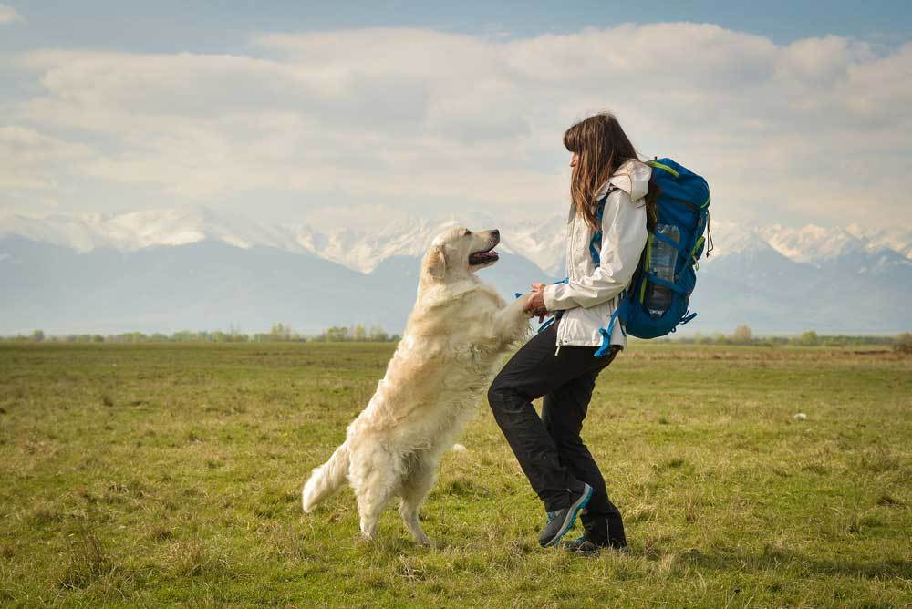 large white dog jumping up on woman with backpack