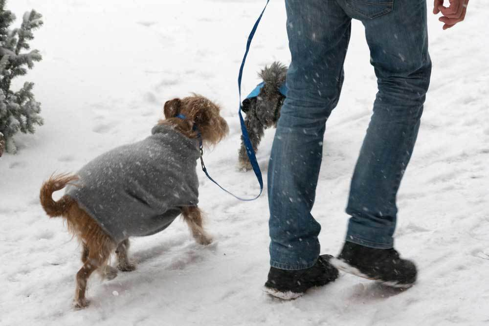 Owner walking dog in the snow