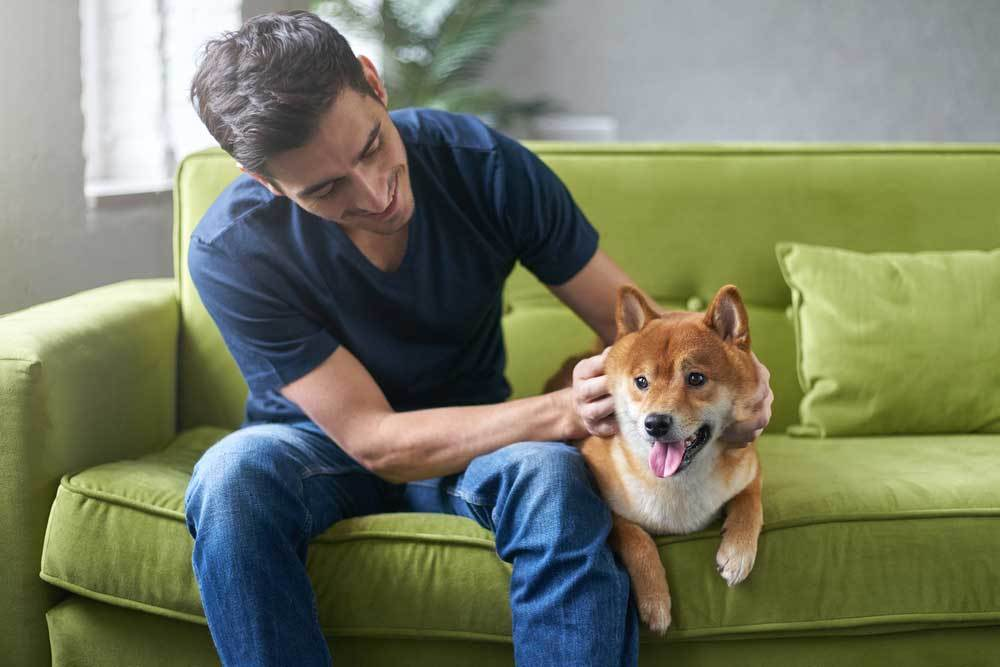 Man petting dog on green couch