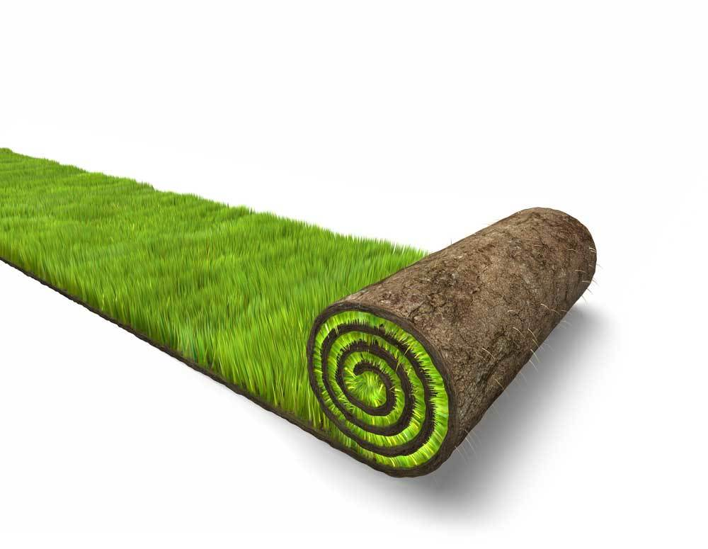 roll of sod on white background