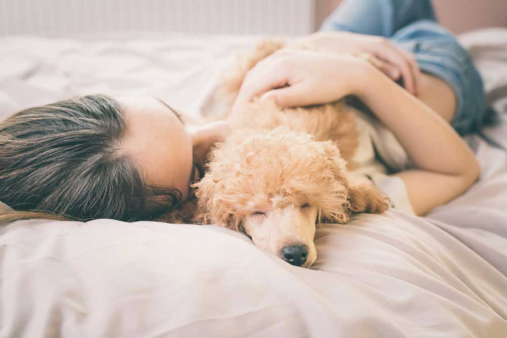 woman asleep in bed with poodle