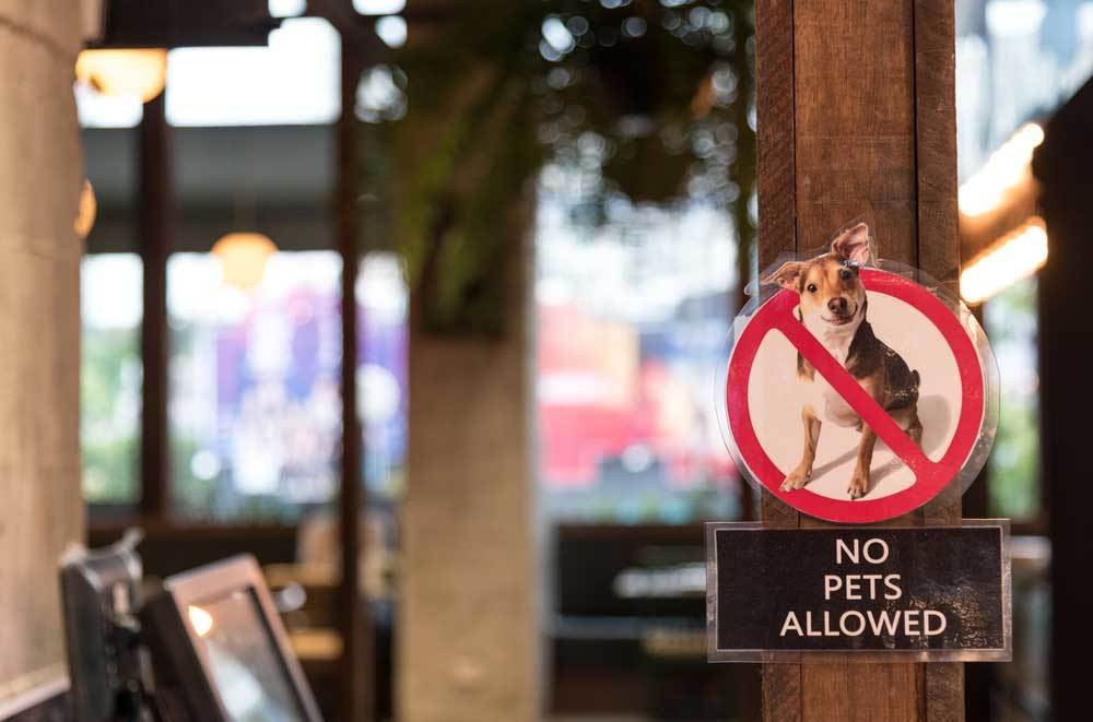 No Dogs Allowed sign in a restaurant