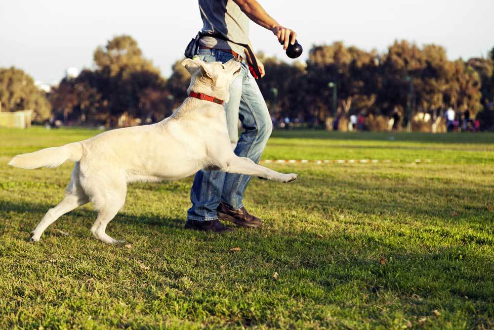 man playing fetch with dog