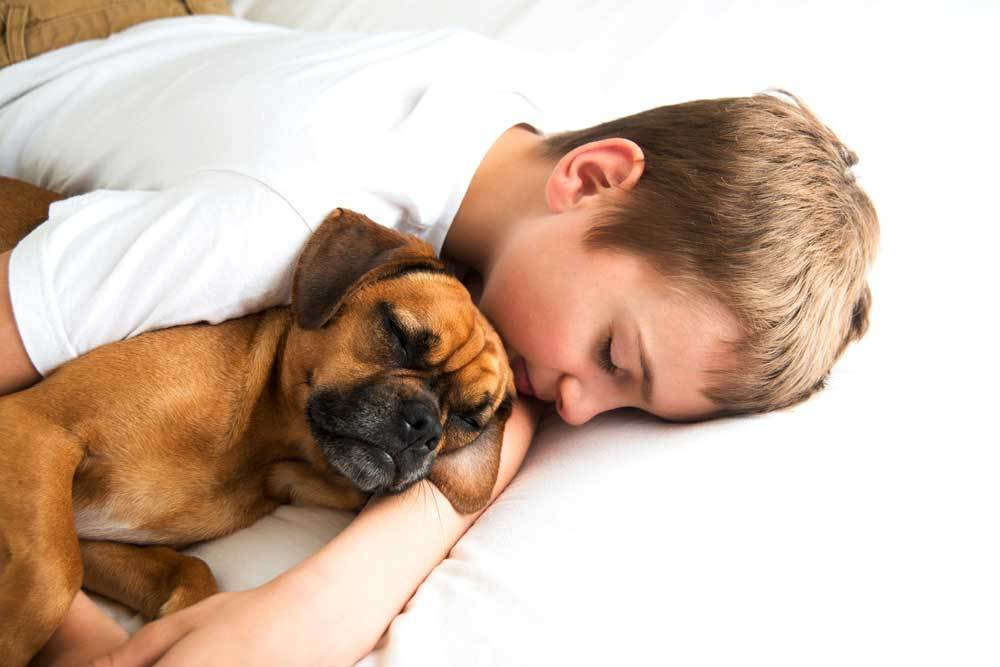 Puppy asleep with child in bed