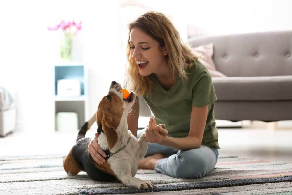 woman playing ball with puppy in living room