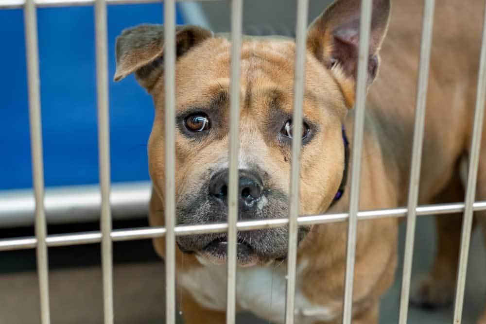 older dog behind bars
