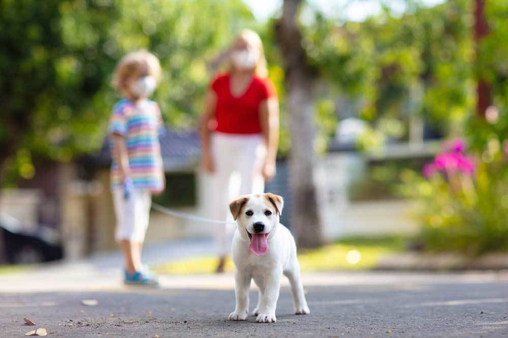 woman and child walking puppy on a leash