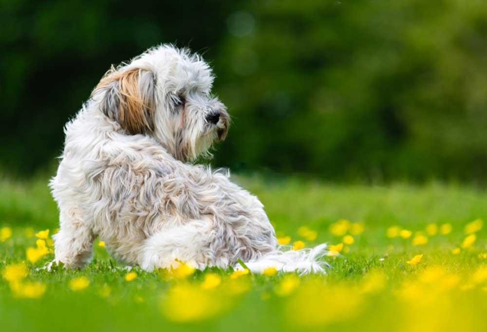 Kyi-Leo sitting in field of yellow flowers