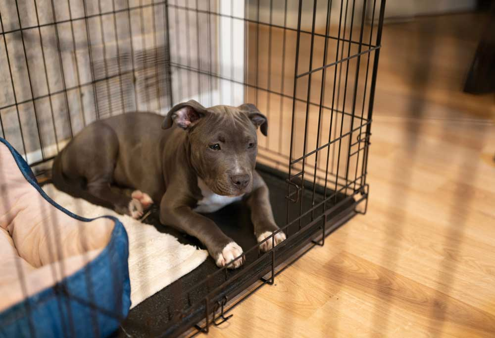 puppy in a crate on a hard wood floor