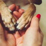 small dog paws in human hands