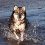 Utonagan running in water