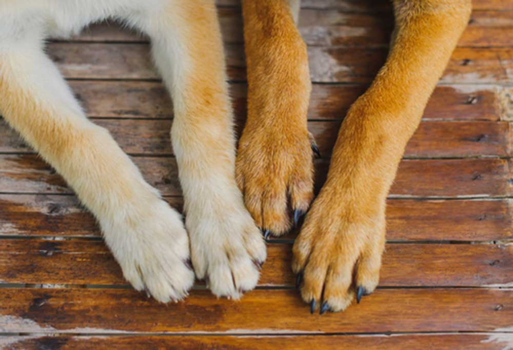 2 sets of dog paws