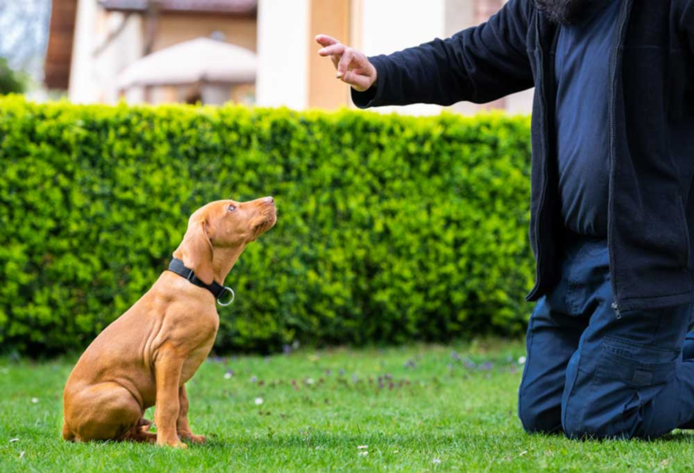 Person outdoors with puppy teaching commands