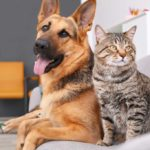 German Shepherd with cat laying in a dog bed