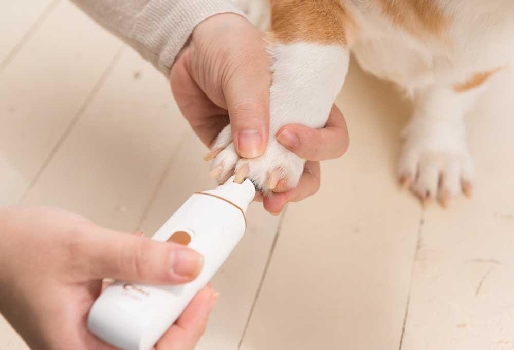 Trimming dog nails with a rotary dog nail grinder