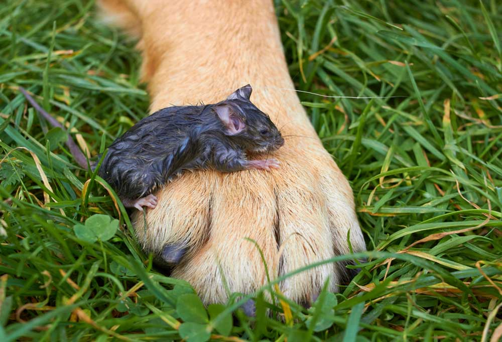 dog with small mouse on its paw standing in grass
