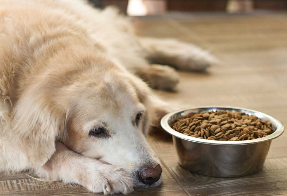 Golden retriever with head laying on floor with food bowl next to it.