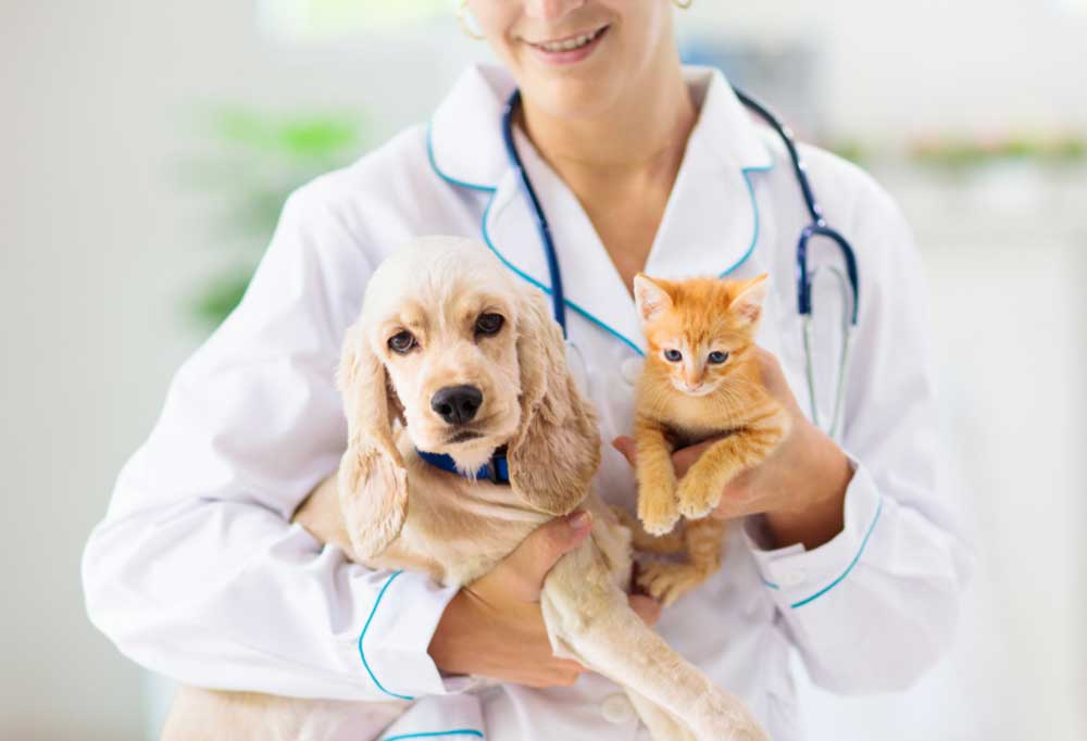 Picture of vets torso while holding  cat and dog