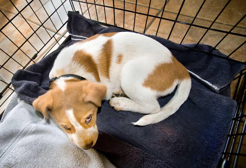 Puppy in a dog crate