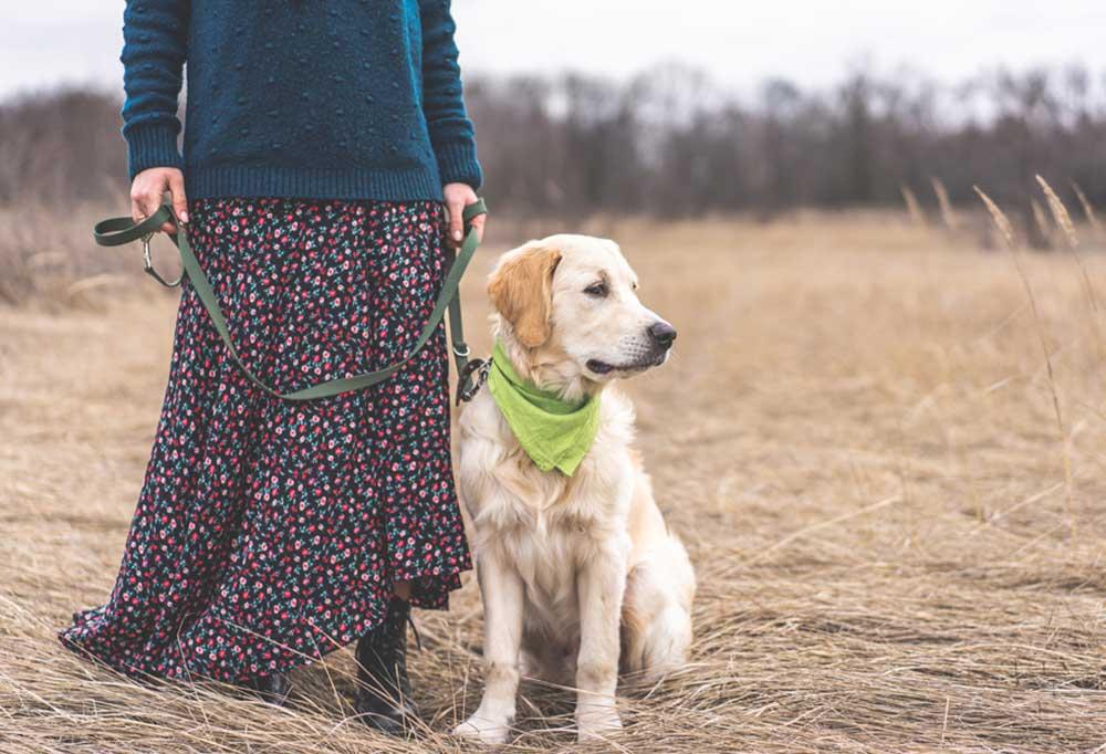 Woman in dress holding dog leash of golden retriever standing in a field of dead wheat