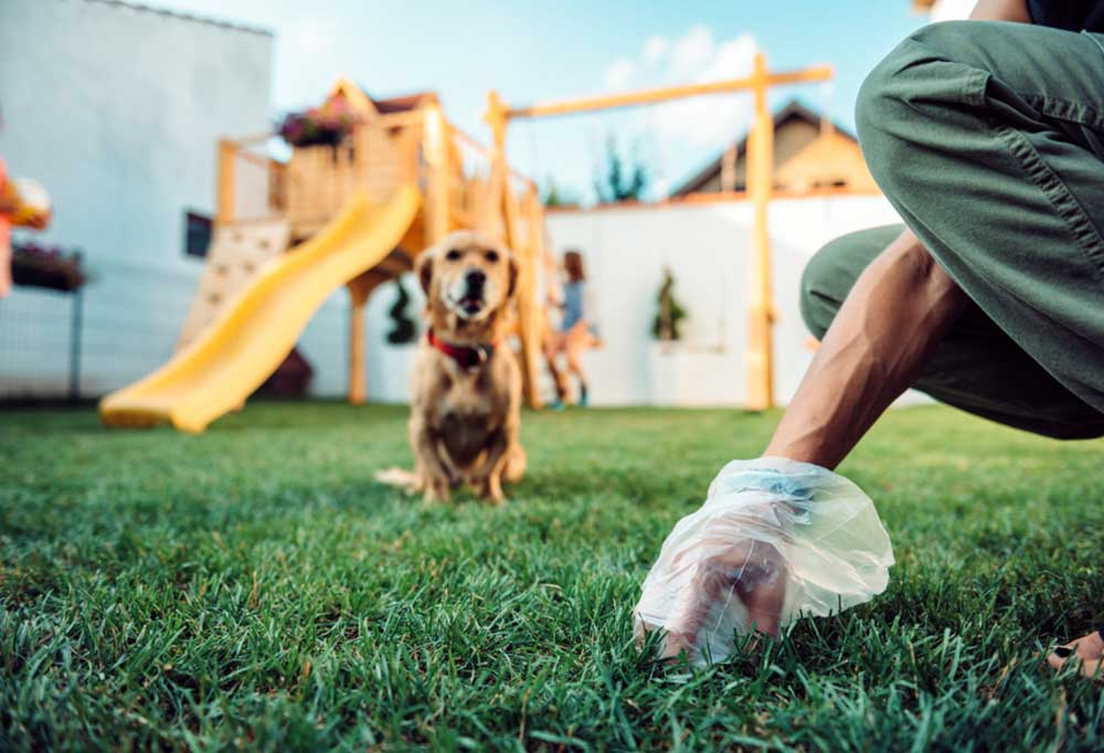 person cleaning up dog poop with gloved hand. Golden retriever and playset in background