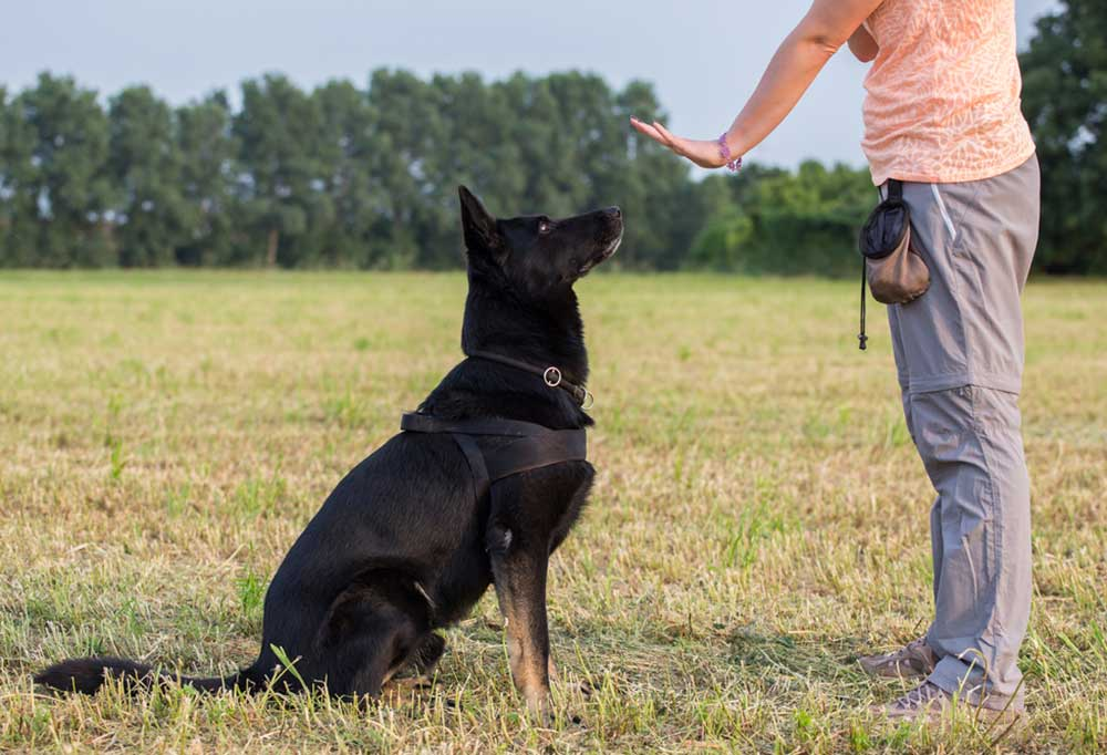 Person and dog in a large field. Person has hand up signaling dog to stay as dog sits.