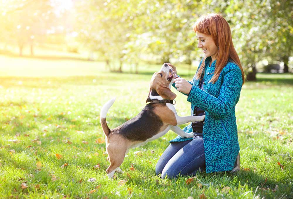 Woman playing with beagle outdoors in the grass