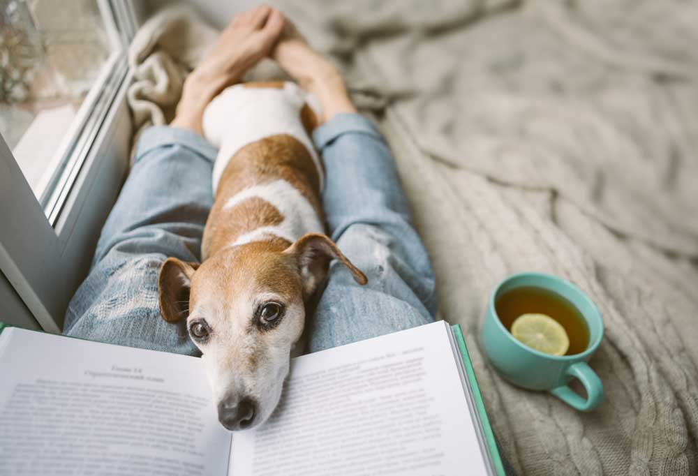 dog laying on owners legs with head resting in a book
