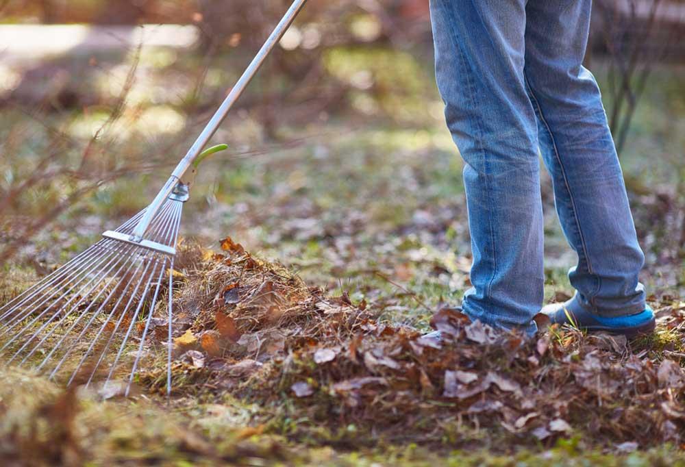 leg shot of someone raking leaves