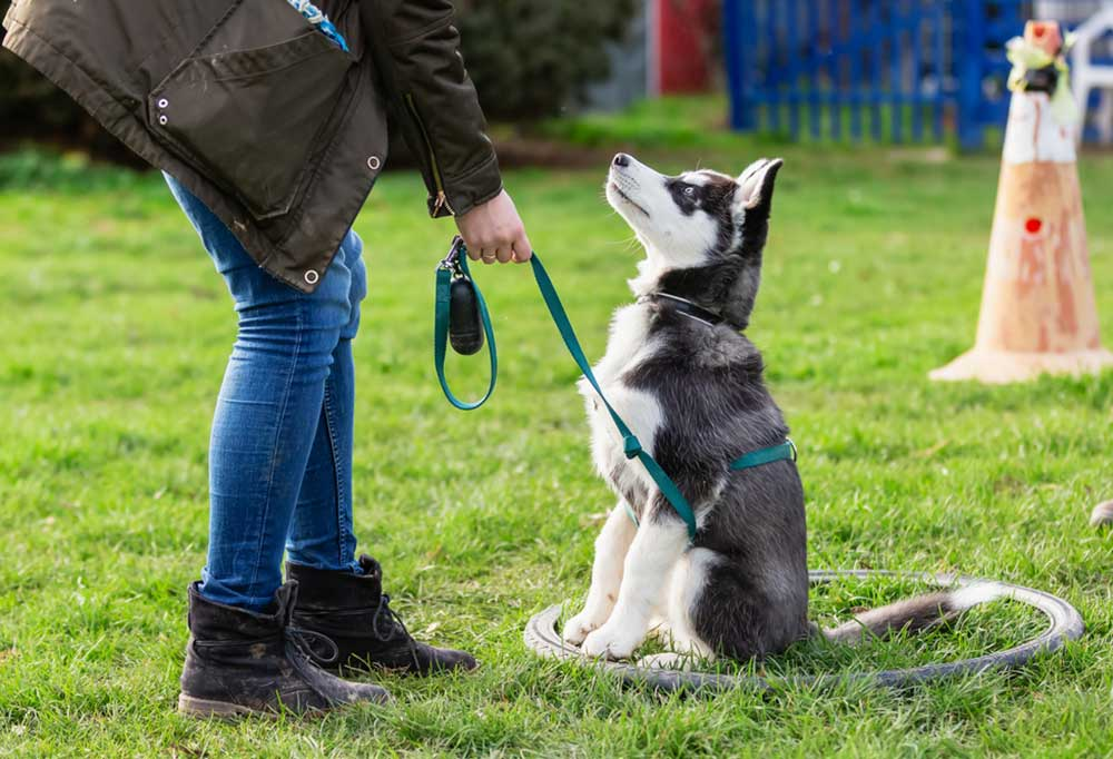 Person bent over talking to husky puppy on leash