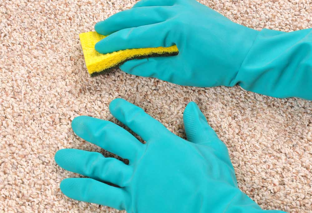 gloved hands scrubbing carpet with sponge
