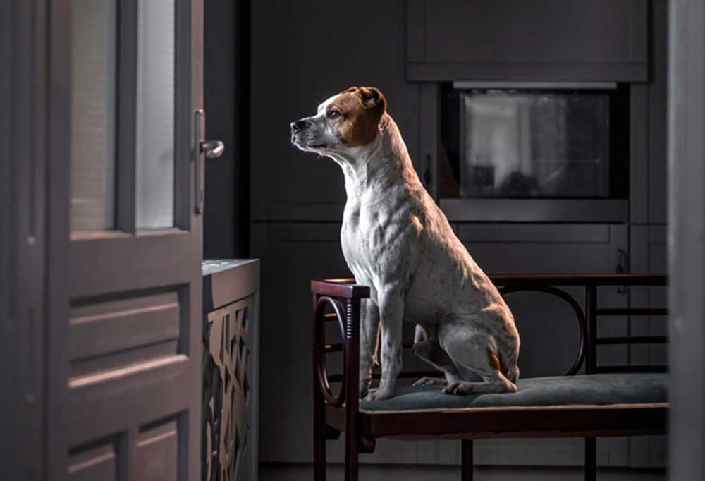 Dog sitting on bench looking out of window