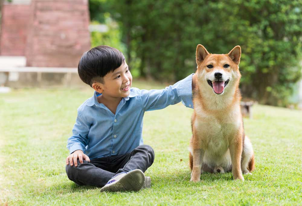 Japanese child sitting on the grass next to a Shiba Inu