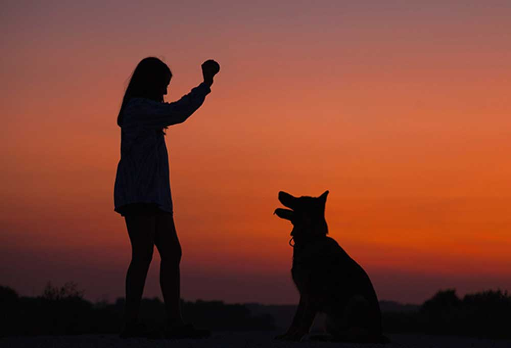 silhouette of woman throwing a ball for a dog at dusk with sunset in background