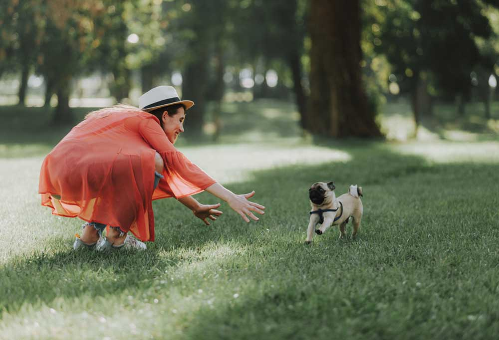 Pug running to owner who is squatting down in the grass surrounded by trees