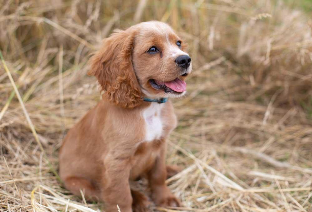 Puppy sitting in tall dead grass