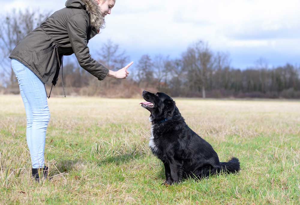Person holding up one finger to dog sitting in a field telling it to stay