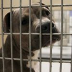 Close up of face of dog behind bars of crate