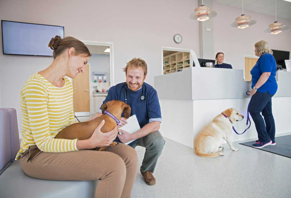Vet squatted talking to dog in waiting room of vet office