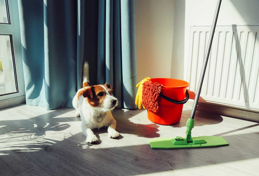 Jack Russell Terrier sitting next to mop bucket and mop in front of window