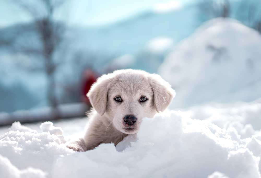 Puppy playing in snow