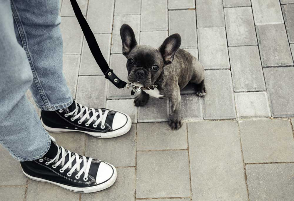 Pug on a lead sitting on brick pavers next to a set of legs wearing black high-top shoes