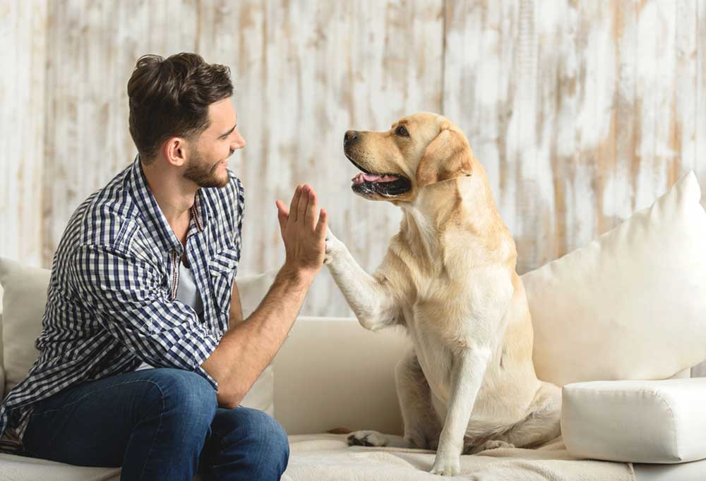 Dog sitting on a couch receiving high five from owner
